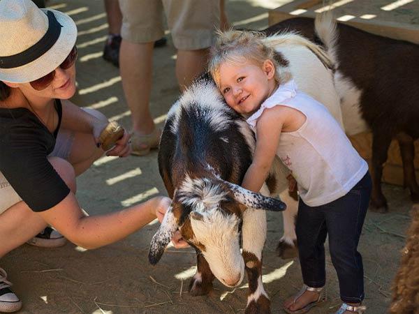 MURIEL农场和动物保健中心