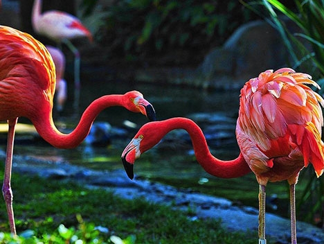 洛杉矶动物园和植物园